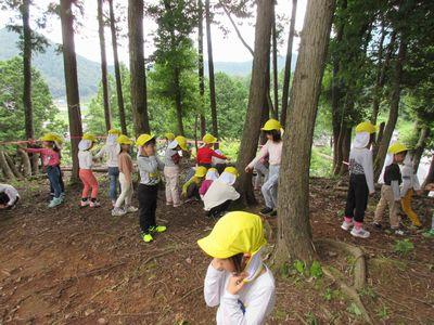 豊楽寺の後ろの山探索.JPG